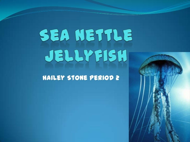 Hailey Stone period 2