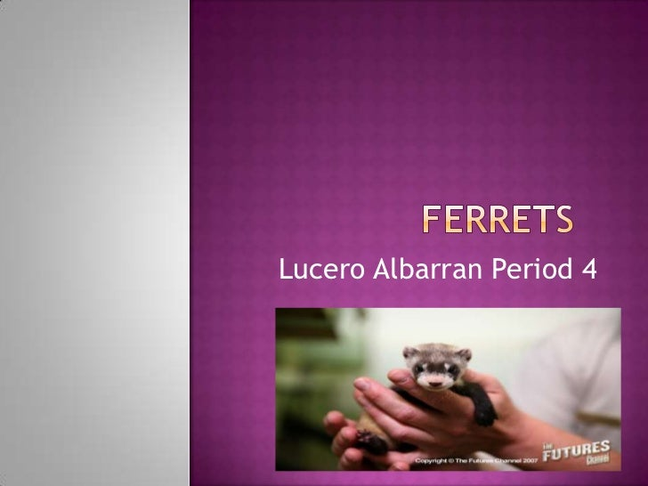 Lucero Albarran Period 4
