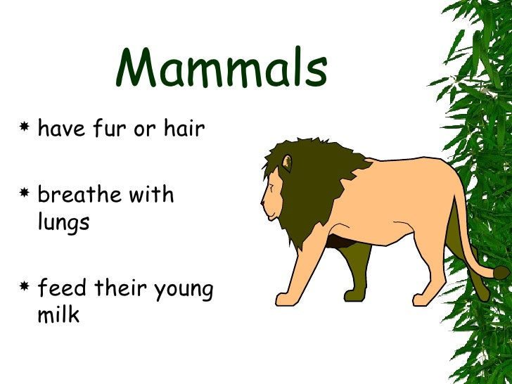 Mammals   have fur or hair   breathe with    lungs   feed their young    milk