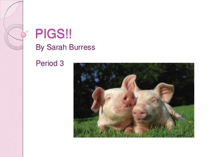 PIGS!!By Sarah BurressPeriod 3