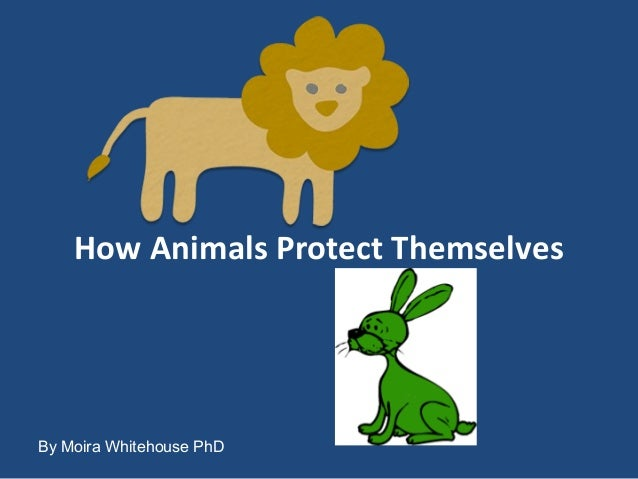 How Animals Protect Themselves By Moira Whitehouse PhD