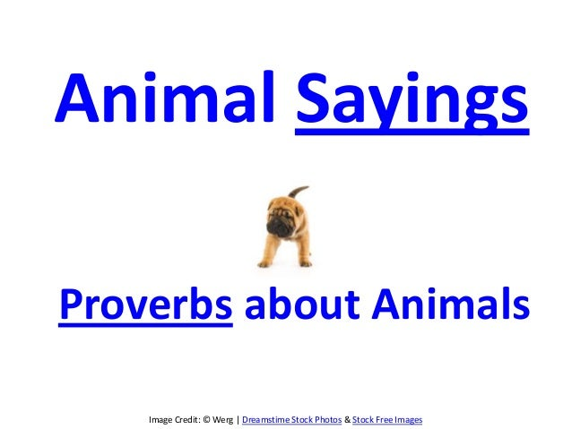 Image Credit: © Werg | Dreamstime Stock Photos & Stock Free Images Animal Sayings Proverbs about Animals