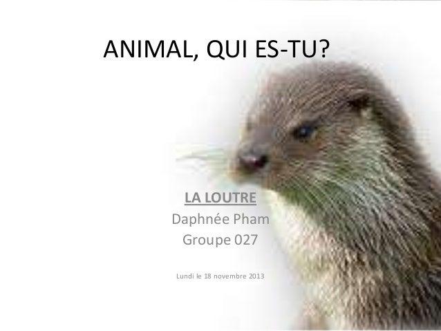 ANIMAL, QUI ES-TU?  LA LOUTRE Daphnée Pham Groupe 027 Lundi le 18 novembre 2013