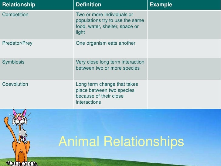 Animal Relationships<br />