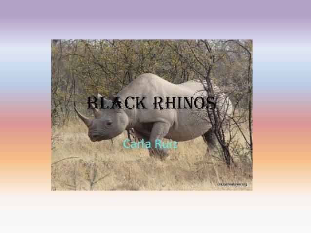 Black Rhinos Carla Ruiz