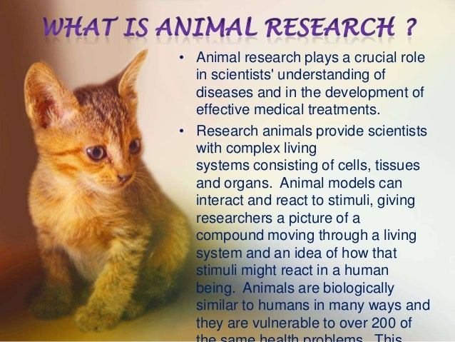 a discussion on using animals in medical research The use of non-human animals in research: a guide for scientists  for scientific and medical research  regulates the use of animals and discussion.