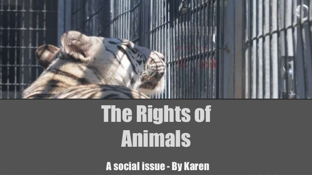 The Rights of Animals A social issue - By Karen