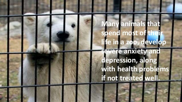 a discussion on the place of animals being in the wild not in the zoo or circuses Debate about 'the place for animals is in the wild, not in zoos or circuses' do you agree: wild or zoo distinct due to being eaten by hungry animals.