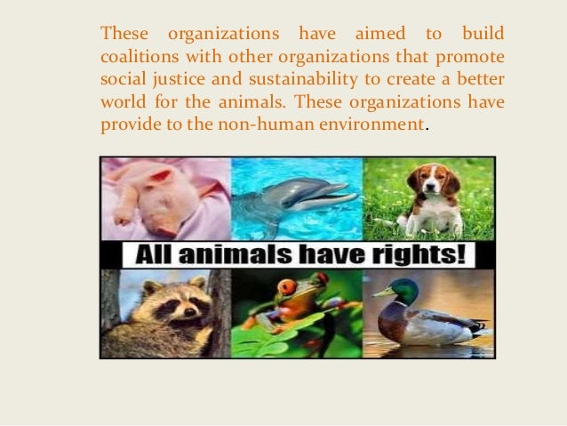 an analysis of animal rights groups A content analysis of magazine covers from highly visible animal rights organizations (peta and vegnews.