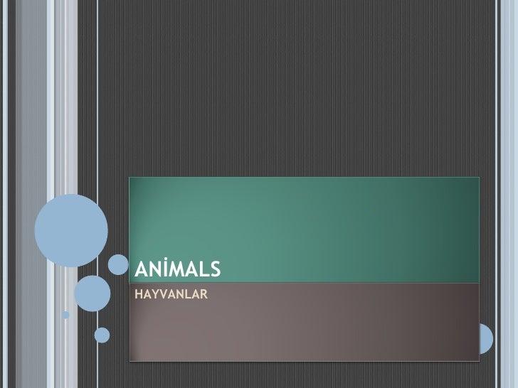 ANİMALS HAYVANLAR