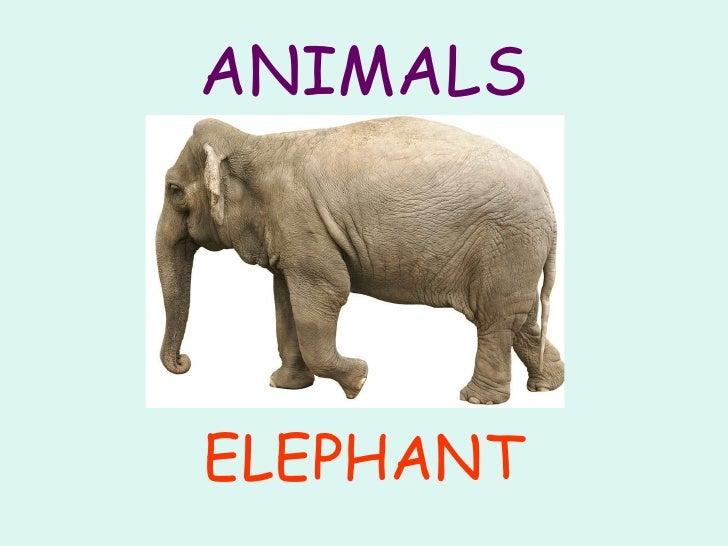 Animals Slide 3