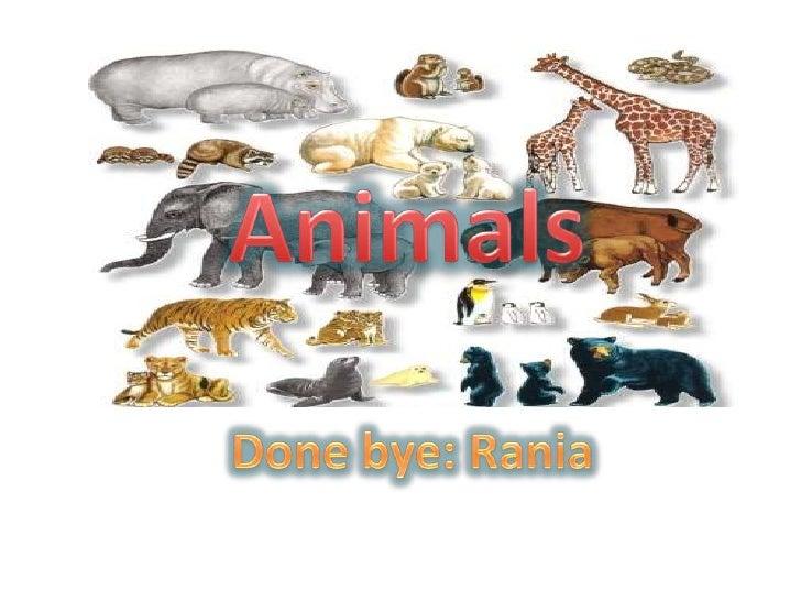 Animals<br />Done bye: Rania<br />