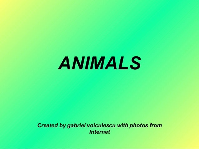 ANIMALS Created by gabriel voiculescu with photos from Internet