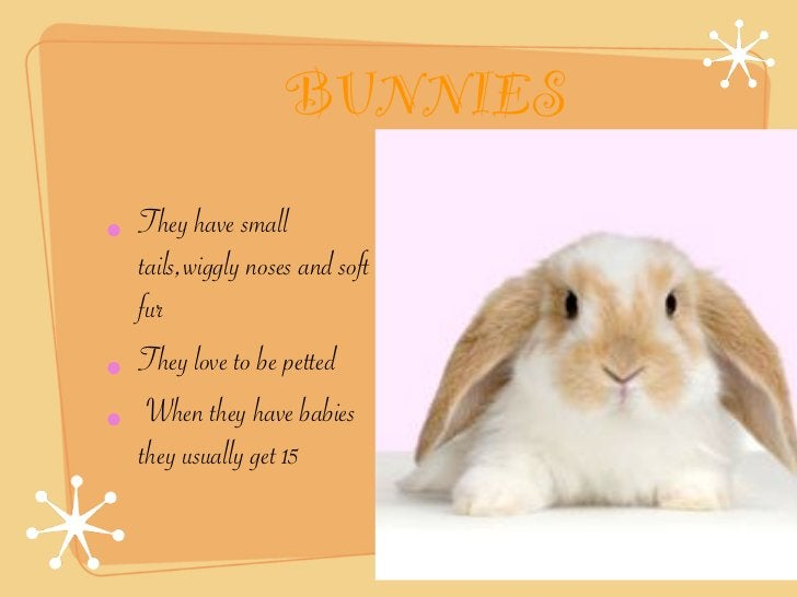 BUNNIES• They have small  tails,wiggly noses and soft  fur• They love to be petted• When they have babies  they usually ge...