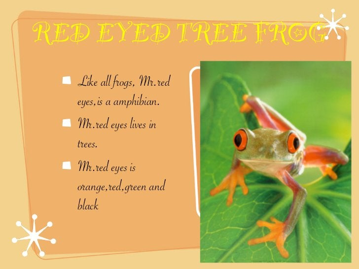 RED EYED TREE FROG  Like all frogs, Mr.red  eyes,is a amphibian.  Mr.red eyes lives in  trees.  Mr.red eyes is  orange,red...