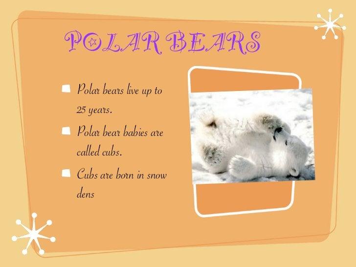 POLAR BEARSPolar bears live up to25 years.Polar bear babies arecalled cubs.Cubs are born in snowdens