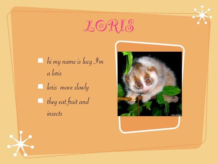 LORIShi my name is lucy Ima lorisloris move slowlythey eat fruit andinsects