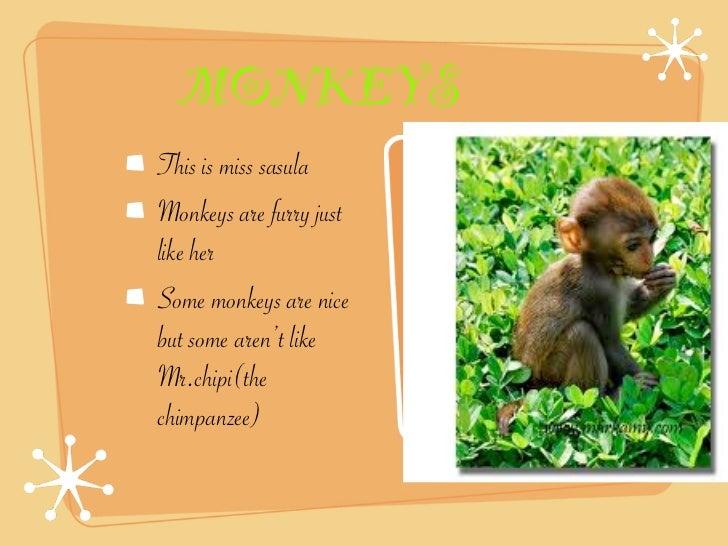 MONKEYSThis is miss sasulaMonkeys are furry justlike herSome monkeys are nicebut some aren't likeMr.chipi(thechimpanzee)