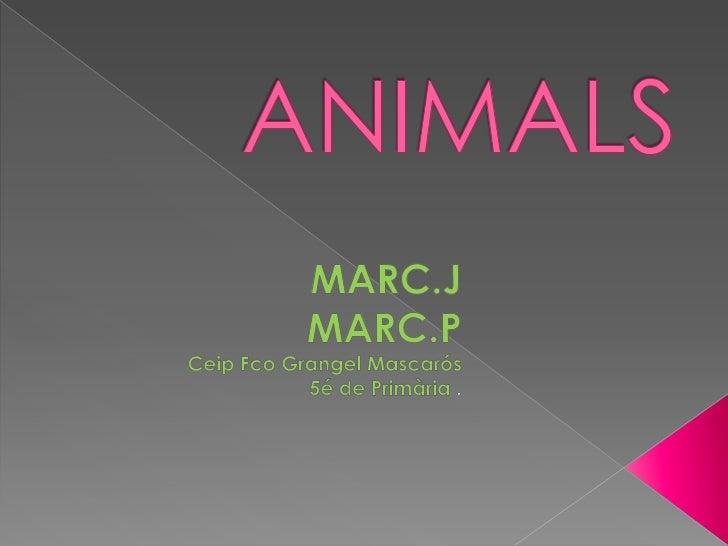 ANIMALS<br />MARC.J<br />    MARC.P<br />CeipFcoGrangelMascarós<br />5é de Primària.<br />