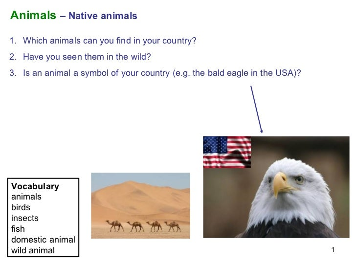 Animals  – Native animals <ul><li>Which animals can you find in your country?  </li></ul><ul><li>Have you seen them in the...