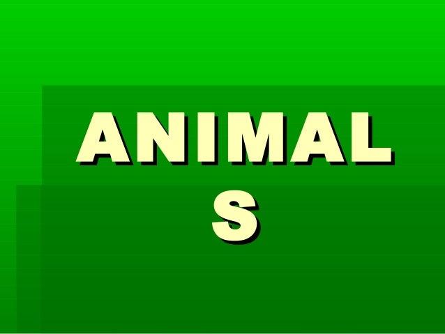 ANIMAL   S