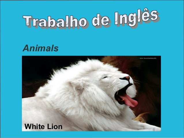 AnimalsWhite Lion