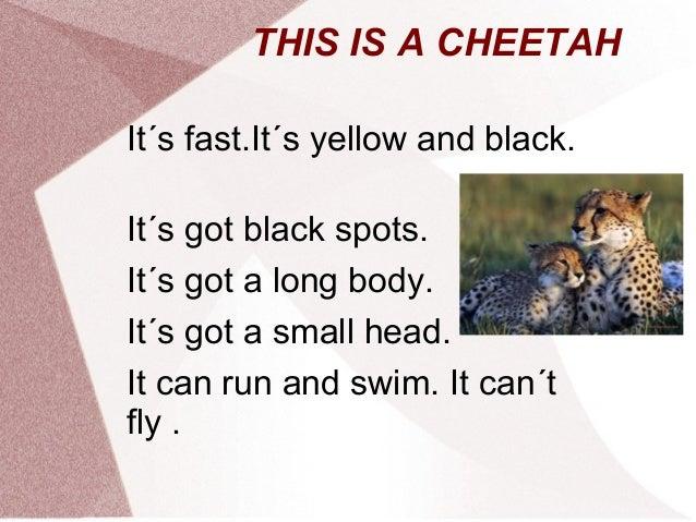 THIS IS A CHEETAHIt´s fast.It´s yellow and black.It´s got black spots.It´s got a long body.It´s got a small head.It can ru...