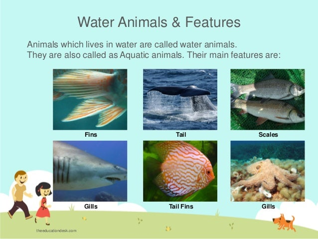 Names of animals found in water