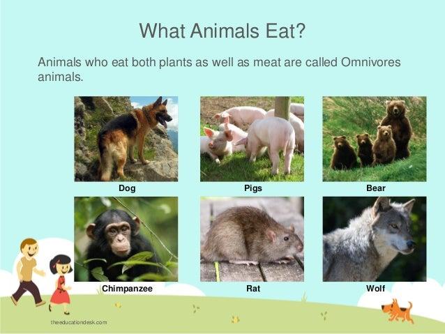 Environmental Science Evs Animals Class Ii
