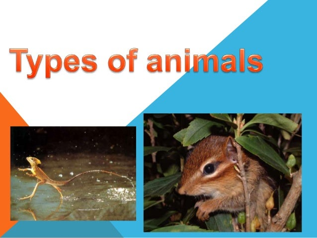 Mammals 1. Now I`m going to talk about mammals