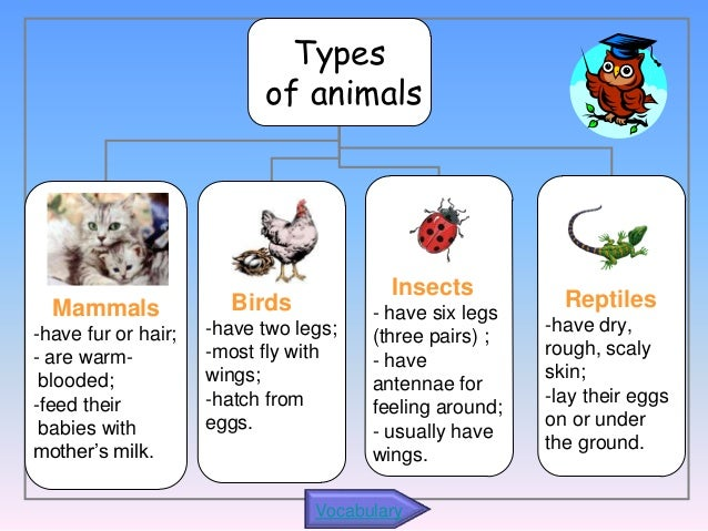 Types of Pet Owners
