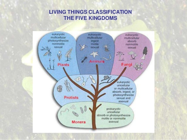 LIVING THINGS CLASSIFICATION THE FIVE KINGDOMS