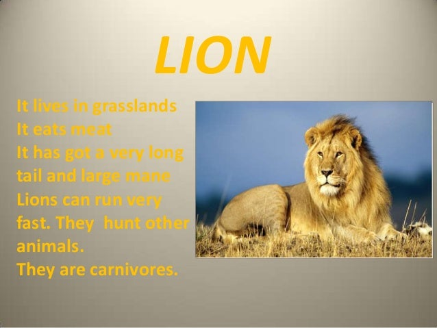 LION It lives in grasslands It eats meat It has got a very long tail and large mane Lions can run very fast. They hunt oth...