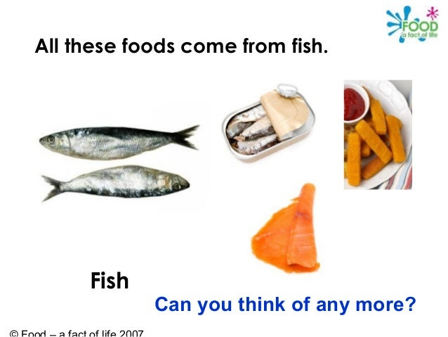 food from animals