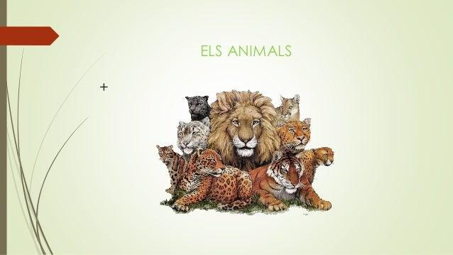 ELS ANIMALS +