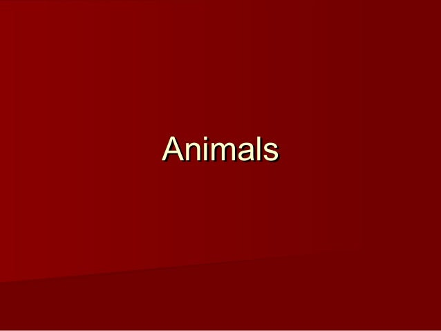 AnimalsAnimals