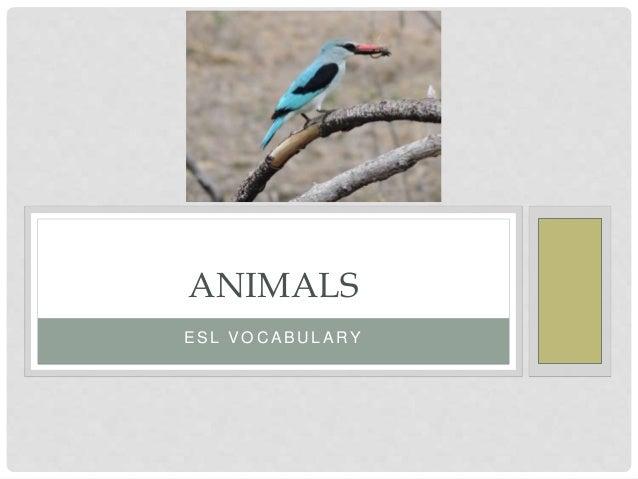E S L V O C A B U L A RY ANIMALS