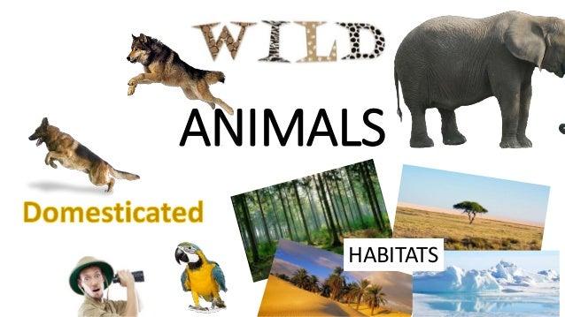 Red Fox Iflscience Wild And Domestic Animals Habitats