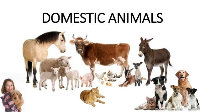 domestic and wild animals Today, i'm going to talk about wild animals information while highlighting some of the key features involved wildlife is a term which is usually associated with the non-domesticated vertebrates.