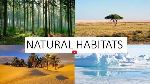 Image result for habitats