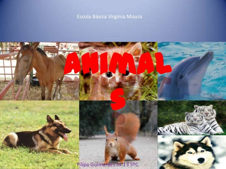Escola Básica Virgínia Moura<br />Animals<br />Filipa Guimarães nº 13 5ºC<br />