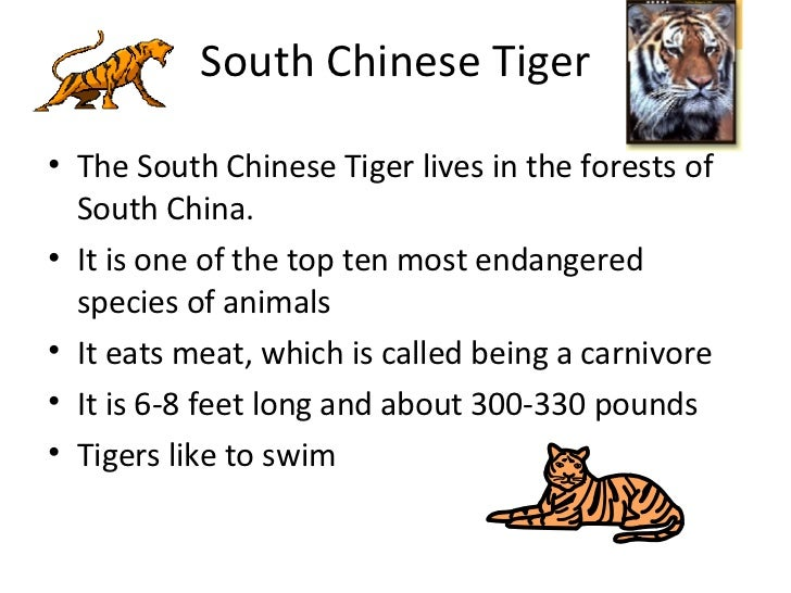 Animals in china for 10 facts about chinese cuisine