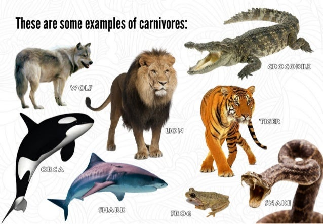 Carnivores Animals Pictures With Names