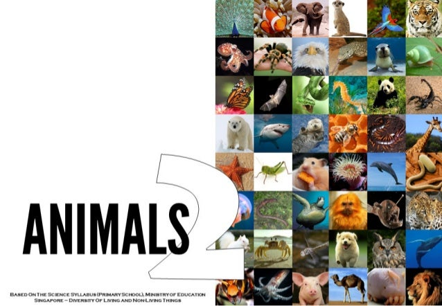 ANIMAL    ) I.  '-,  BASED ONTHE SCIENCE %LlABUS (PRlMARYSCl'K)OL).  M| NTRYOF EDUCATT  SINGAPORE -' DIVERSITY OF LIVING A...