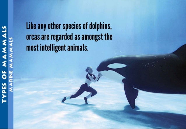 """u"""" 2"""" _ , —  like any other species of dolphins,  orcas are regarded as amongst the most intelligent animals.   3 2 2 < 2 ..."""