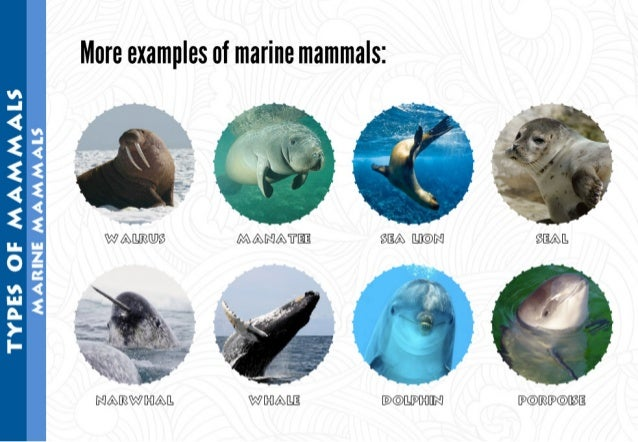 "More examples of marine mammals:   W AILIRQDS  I1 '   "" .   ' I  fl'   I v  fig .   . '  ~. ',; . ,  . .  ' -(6') Q' _  9* ..."