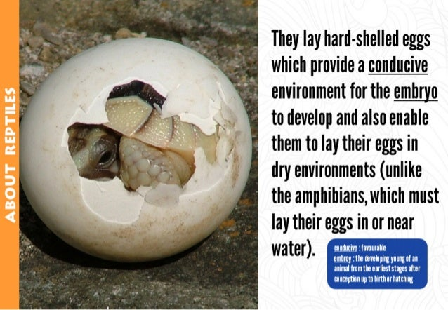 They lay hard-shelled eggs which provide a conducive environment for the mm to develop and also enable them to lay their e...
