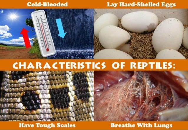 Cold-Blooded Lay Hard-Shelled Eggs                     ' . n_-r~'-  IiTsI*I: 'i¢s or R      o .  - .  l ,  . I .  I,  I.  ...