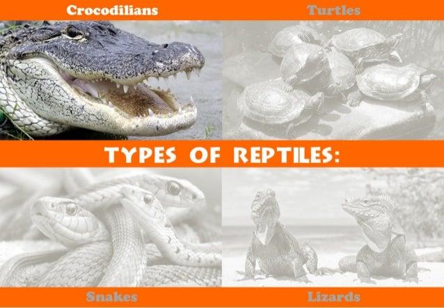 Crofqdilians  *7f<v¢%.   TYPES or REILES: