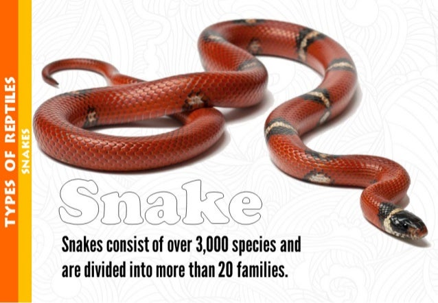 ~ ~' ~'.  .. ... .. -'        Snakes consist of over 3,000 species and are divided into more than 20 families.